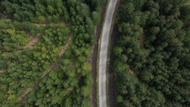 Forest in summer with a countryside road video