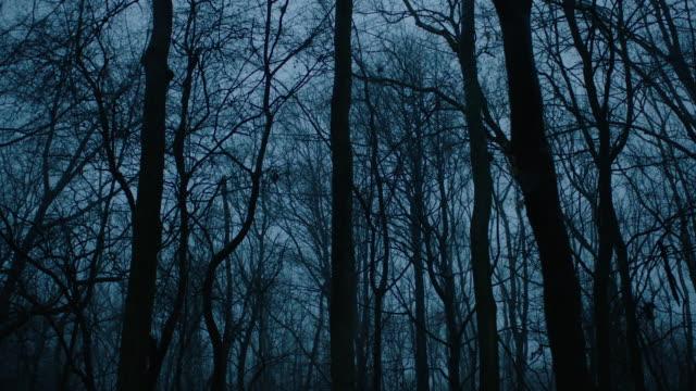 vídeos de stock e filmes b-roll de forest in the blue hour - escuro