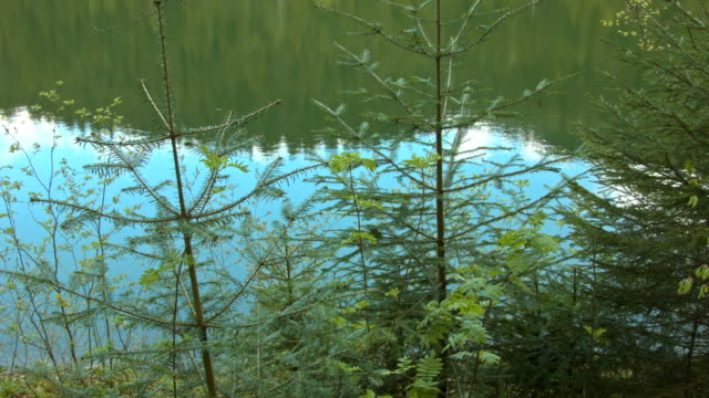 Forest in the Carpathian Mountains video