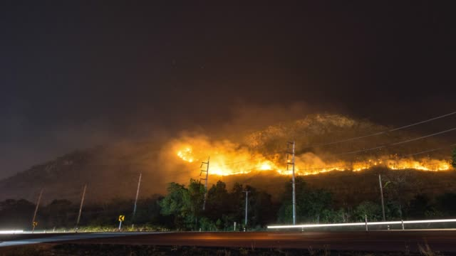 Forest in the Fire Near A Road, Wildfire at Night, Time Lapse Video
