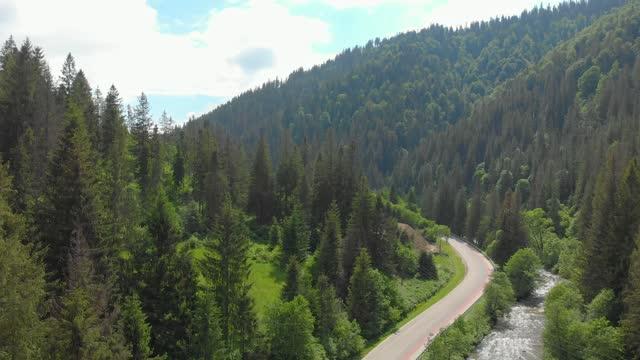 vídeos de stock, filmes e b-roll de floresta nas montanhas - ucrânia