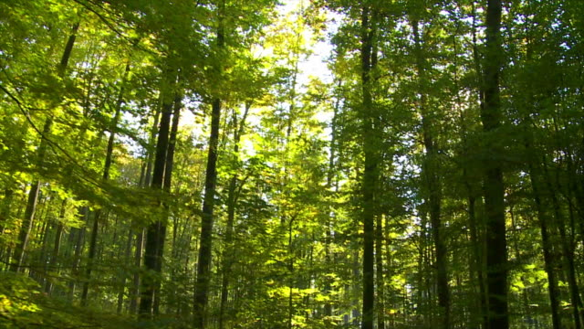 POV Forest In The Sunlight Tracking Shot video