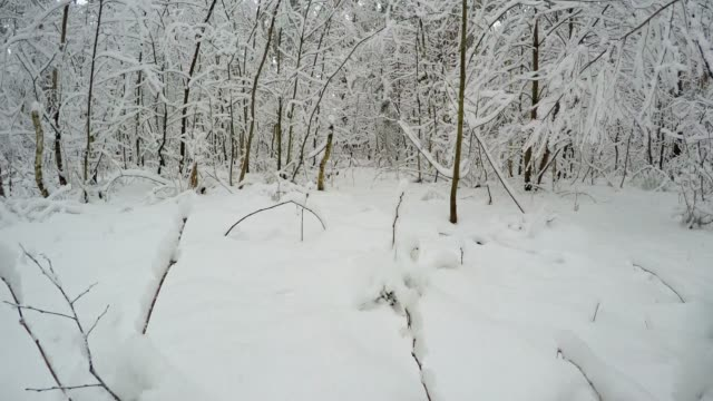 Forest in the winter season. video