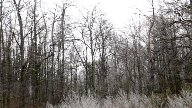 forest in the wintertime without snow - albero spoglio video stock e b–roll