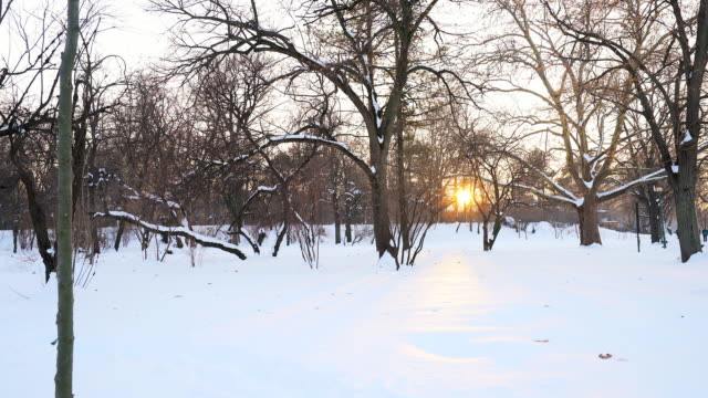Forest in winter time. video