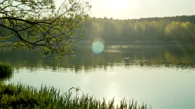 Forest lake at evening video