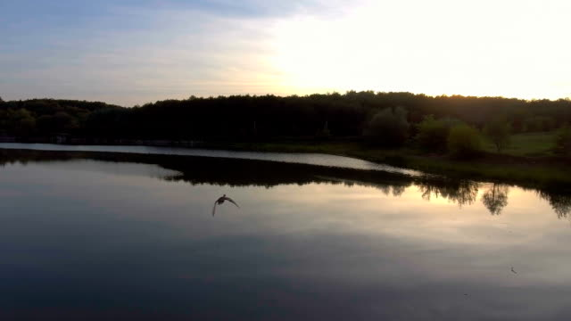 forest lake at sunrise. Aerial view - vídeo