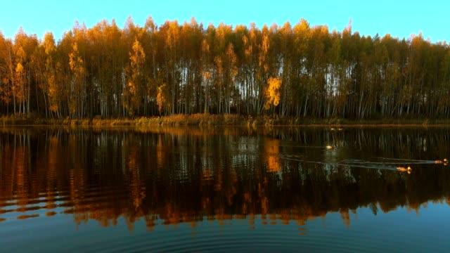 日出時湖,鴨子在水中游泳。 - 池 個影片檔及 b 捲影像
