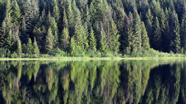 hd forest lake reflection - trillium stock videos & royalty-free footage