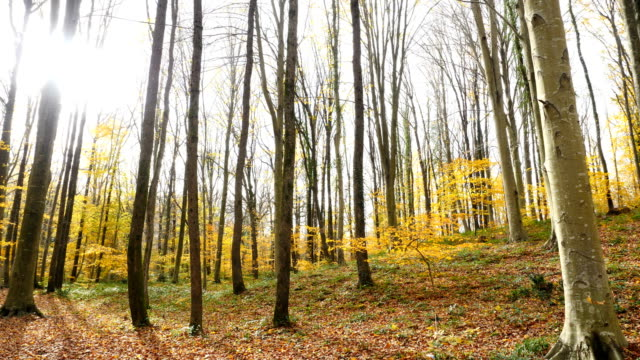 forest landscape in autumn video