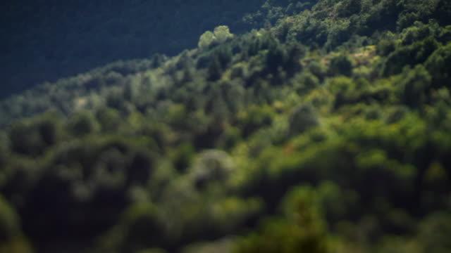 Forest landscape in tilt shift lens video