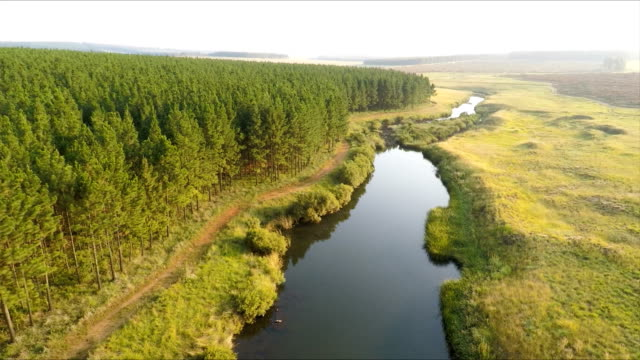 Forest landscape, Mpumalanga, South Africa video