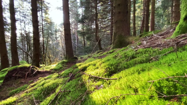 forest landscape of norway - muschio flora video stock e b–roll