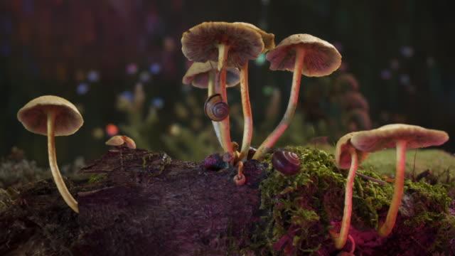 skog - makro - höst plocka svamp bildbanksvideor och videomaterial från bakom kulisserna