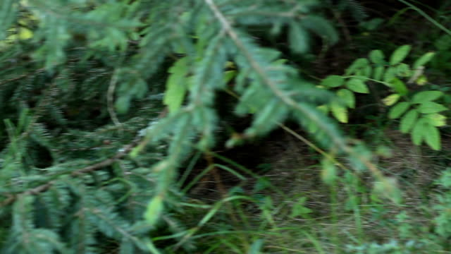 Forest Mushroom video