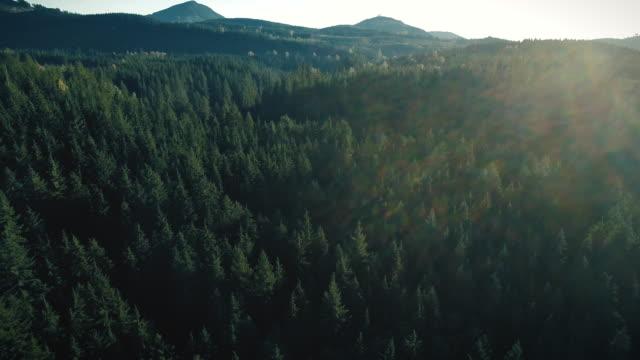 vidéos et rushes de forest nature fond lens flare antenne - nord