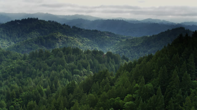 Forest North of Santa Cruz, California - Drone Shot
