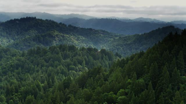 vídeos de stock, filmes e b-roll de floresta norte de santa cruz, califórnia-tiro do zangão - forest