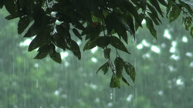 Forest of Rain video