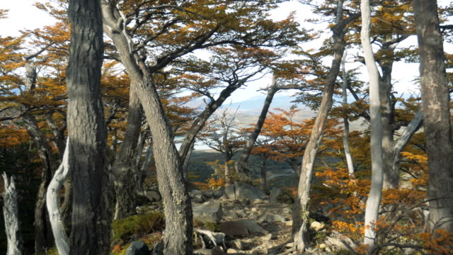 Forest on Torres Del Paine, National Park in Patagonia, Chile 2 Forest on Torres Del Paine, National Park in Patagonia, Chile 2 sorpresa stock videos & royalty-free footage
