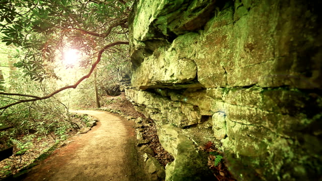 Forest path near the rock on sunny day. Nature background. video