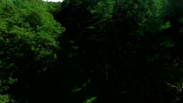 forest path, the flight of a drone over the forest - vídeo