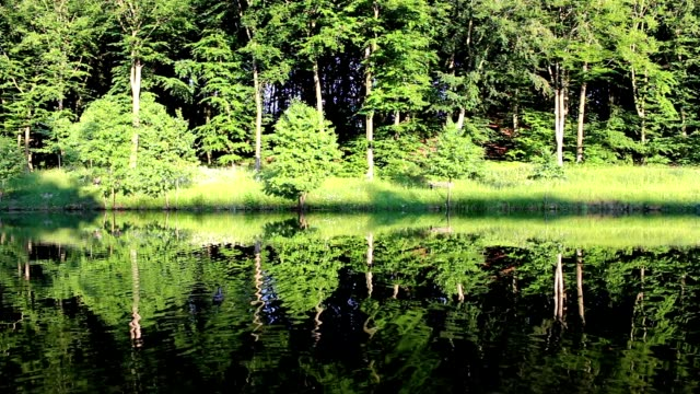 Forest Reflecting In Calm Lake Water video