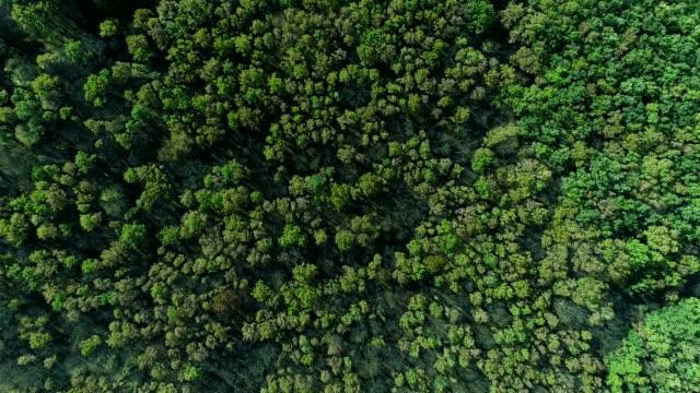orman rezerv hava görünümü yeşil ağaçlar taçlar - optik yaklaştırma stok videoları ve detay görüntü çekimi