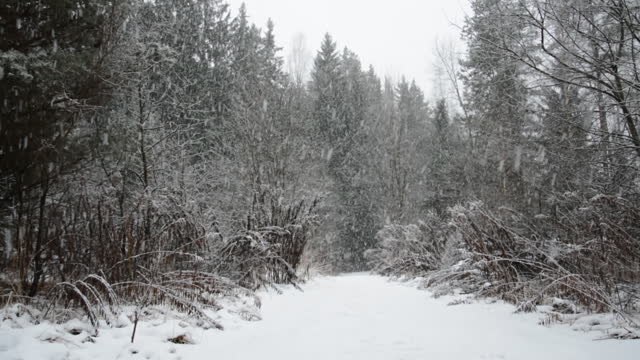 Forest road in winter in heavy snow video