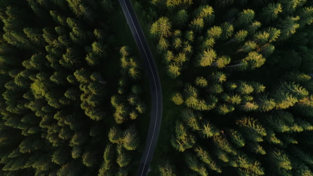 Forest road trip from drone view Aerial view on the mountain road in the forest timber stock videos & royalty-free footage