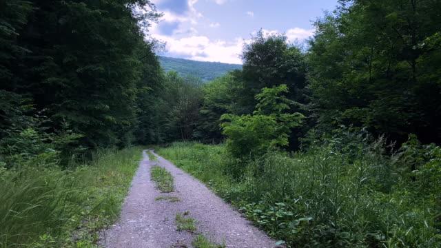 forest road - центральная европа стоковые видео и кадры b-roll