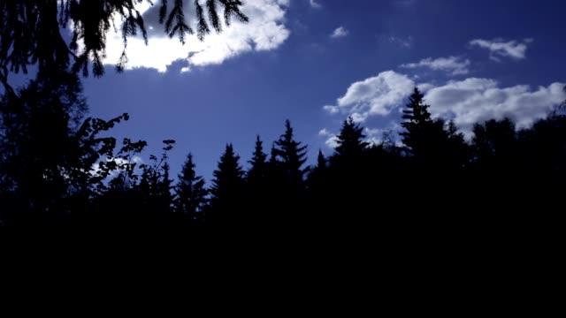 vidéos et rushes de silhouette de la forêt contre le ciel - vue partielle