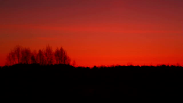 Forest silhouette at sunset. Red sunset over forest, sunset background video