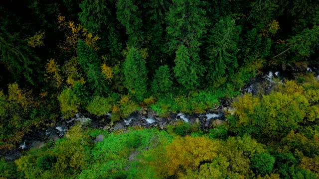 Forest stream in ravine between pine trees. Aerial view