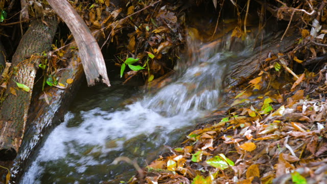 forest stream in sunny autumn forest