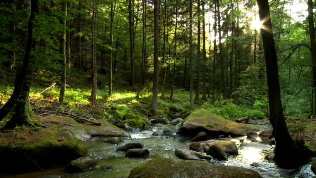T / L Wald einströmen der Sonne am Abend – Video
