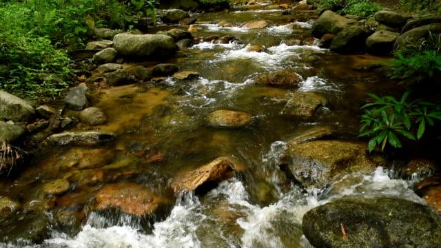 Forest stream running over mossy rocks video
