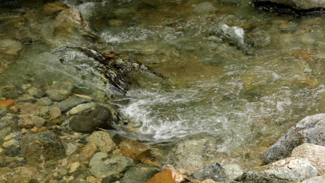 Forest stream Forest stream running water stock videos & royalty-free footage