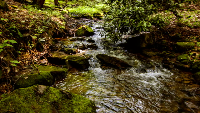 Forest stream video