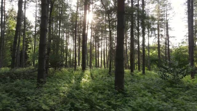 luce solare della foresta - bosco video stock e b–roll