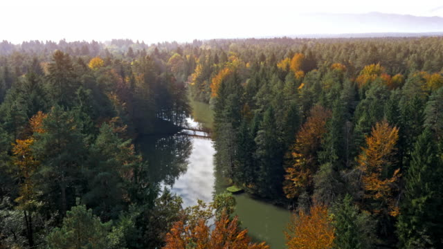 AERIAL Forest surrounding a lake shining in the sun video
