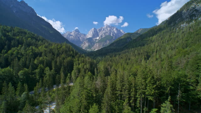 AERIAL Forest surrounding the river overlooking the glorious mountains in the distance