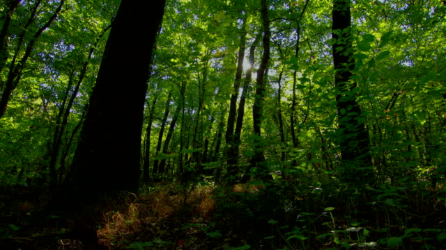 Forest time lapse motorized slider with moving shadows. DSLR HDR Raw quality video
