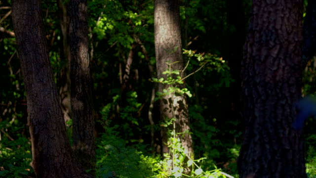лес time lapse, оттенков двигаться, hdr 1080 p - дубовый лес стоковые видео и кадры b-roll