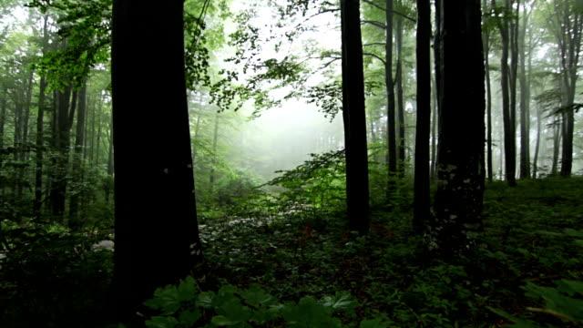 таймлапс лес с туман через деревья декоративной - дубовый лес стоковые видео и кадры b-roll