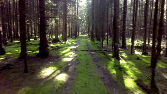 Forest Track Aerial Flyover Shot video