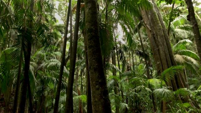 avustralya rainforest 4k orman trail ve rainforest canopy - kubbe stok videoları ve detay görüntü çekimi