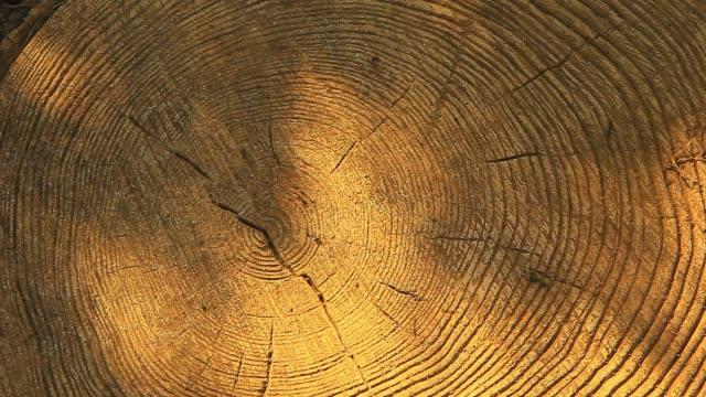 forest tree stub sun shadow nobody hd footage - wood texture filmów i materiałów b-roll