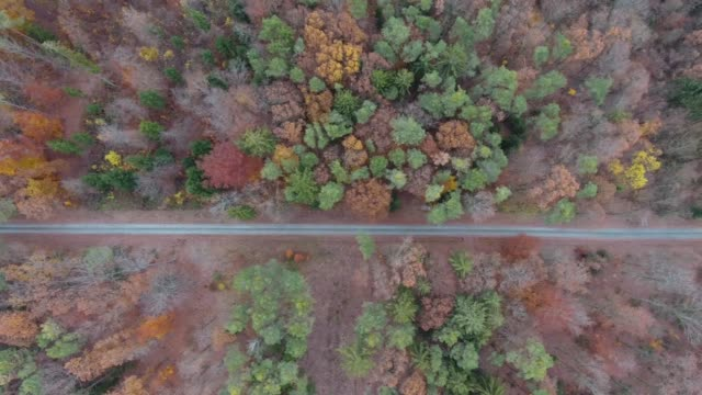 Forest trees in autumn video