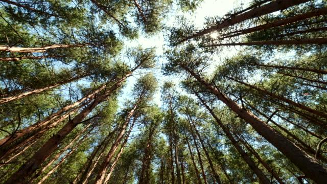 在炎熱的夏日,在陽光的照射下,森林樹梢。 - 枝 植物部分 個影片檔及 b 捲影像